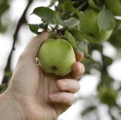 Beware of bad seeds in the fruit-picking industry