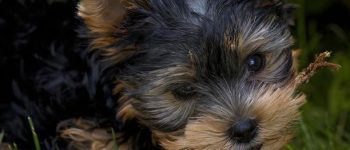 Kitten And Puppy Pics Boost Your Productivity, According To Science