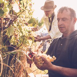How to become a Viticulturist in Australia