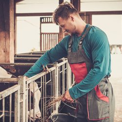 How to become a farmer in Australia: careers in agriculture