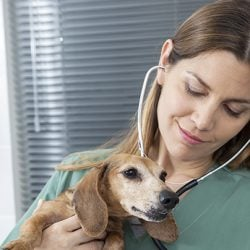 How to become a veterinary nurse in Australia: careers in animal care