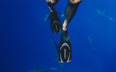 Shark Handler